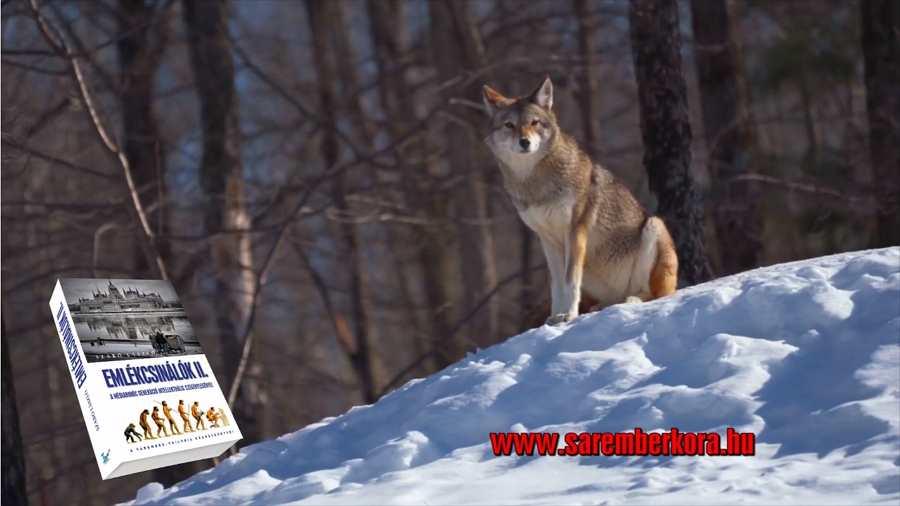 Szélszava és a farkasok tanítása - EMLÉKCSINÁLÓK 2